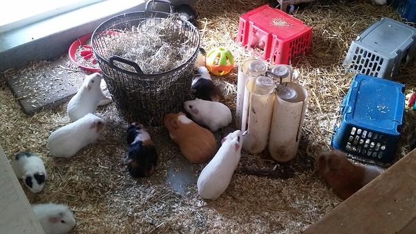 kinderboerderij holten (11)