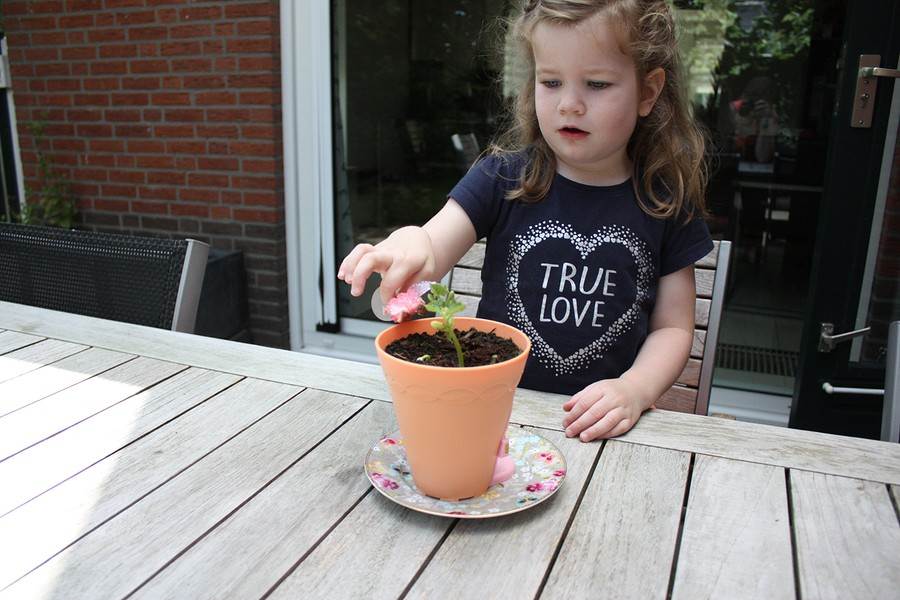 my-fairy-garden-flowerpot-10