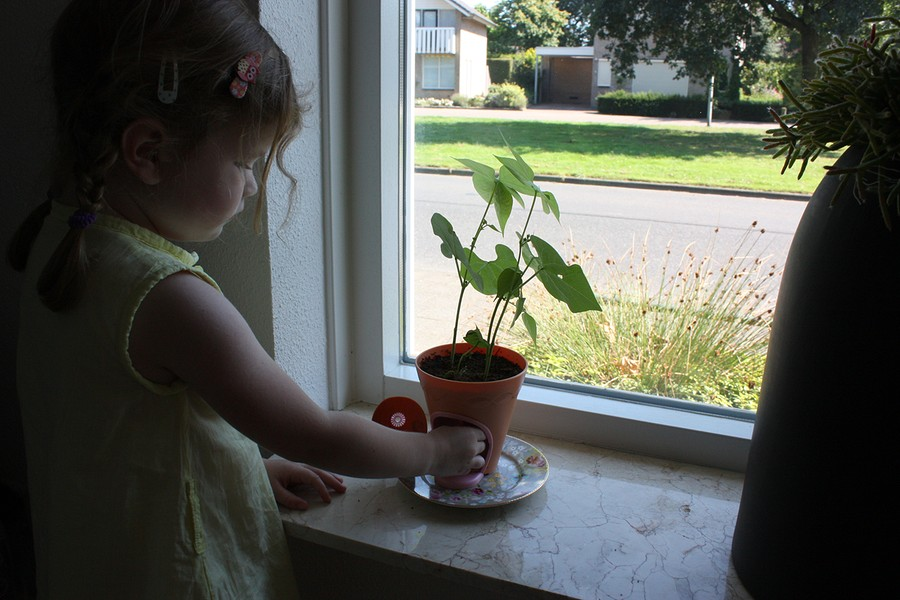 my-fairy-garden-flowerpot-11