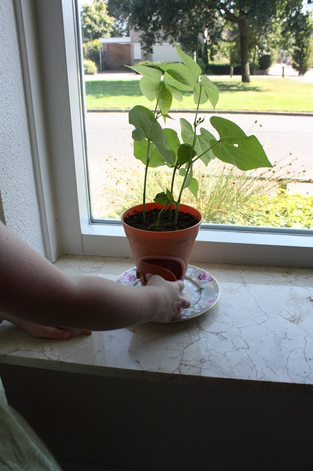 my-fairy-garden-flowerpot-12