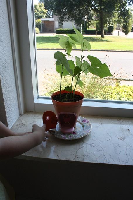 my-fairy-garden-flowerpot-13