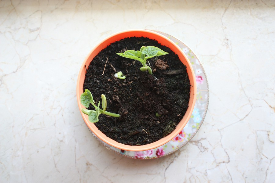 my-fairy-garden-flowerpot-3