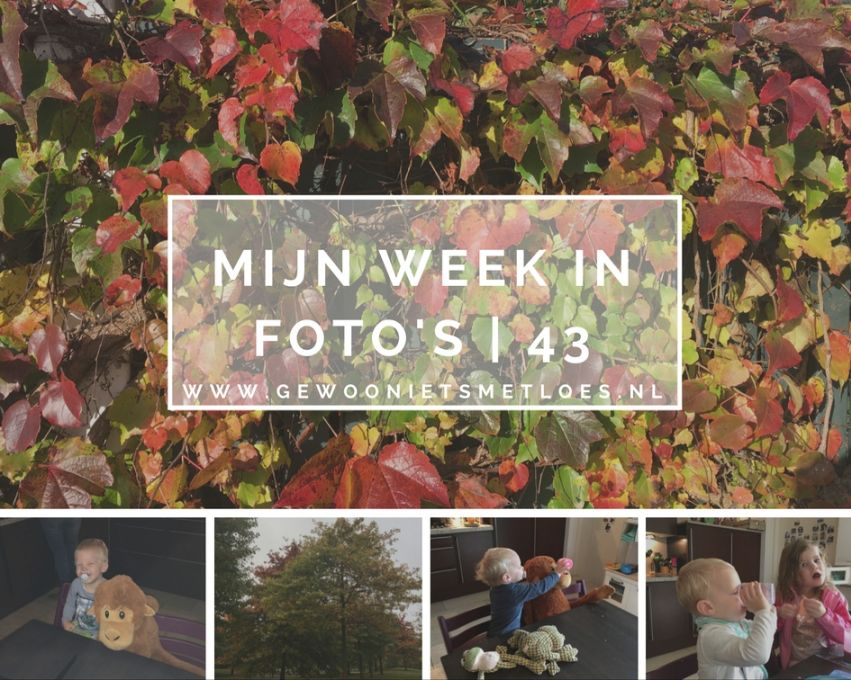 mijn week in foto's 43