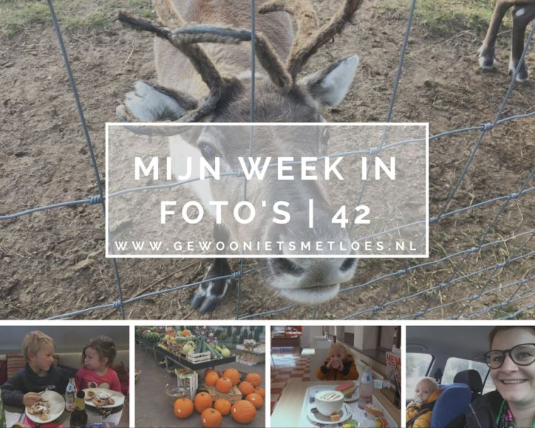 Mijn week in foto's | 42